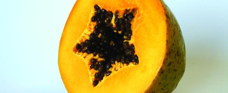 Melonowiec właściwy (Carica papaya), czyli papaja
