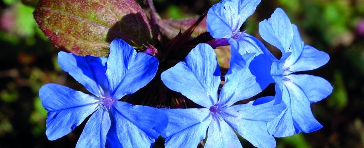 Esencje kwiatowe Edwarda Bacha