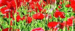Wielkanocne zioła i kwiaty