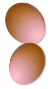 Jajko symbolem życia