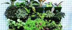 Ogród wertykalny  – zielona ściana przez cały rok