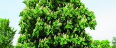 Lecznicza rola drzew
