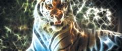 Tygrys - źródło siły i dobrobytu