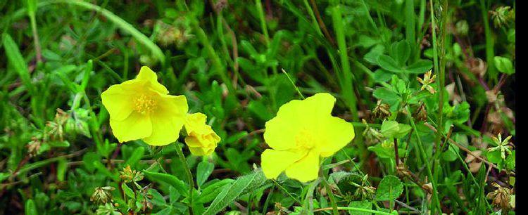 Esencje kwiatowe dr. Bacha (cz. 3)