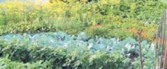 Marchew i wzajemna ochrona roślin