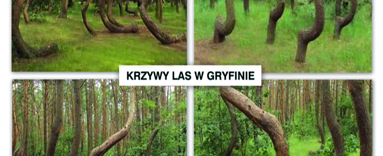 Drzewa w miejscach mocy