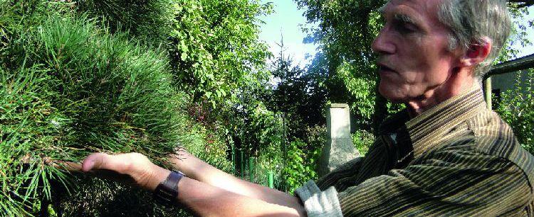 Egzotyczny ogród ziołowy
