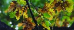Listopadowe wianki i rośliny