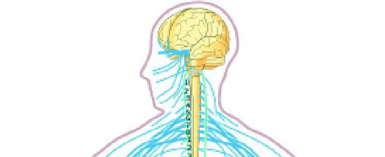 Jak chronić  układ nerwowy