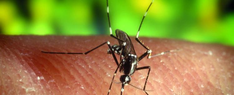 Kłopoty z owadami