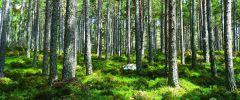 Więź człowieka z lasem