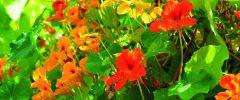 Rośliny,  które warto  uprawiać nie tylko na balkonie…