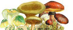 Właściwości grzybów