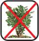 Kontakt człowieka z roślinami niewskazany
